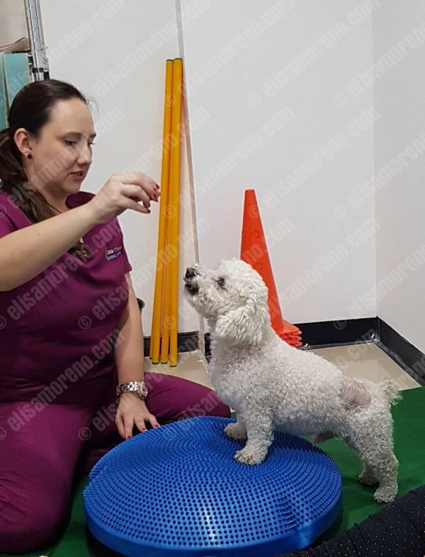 Tratamientos de Fisioterapia Canina